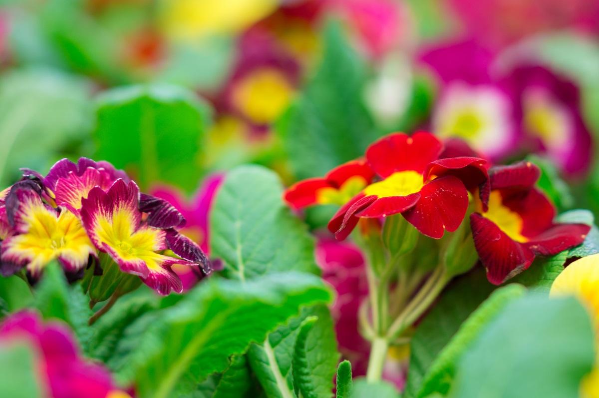 Byliny - moc kolorów w każdym ogrodzie.