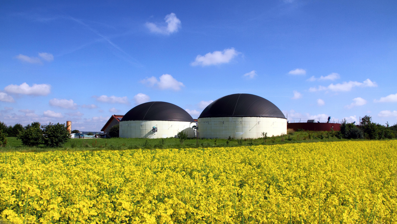 suszarnia do biomasy za polem rzepaku