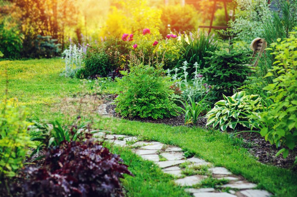 ogród w którym znajduje sie wiele roślin
